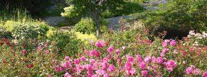 Jardin floral-banniere